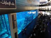 Dubai - Mall - Aquarium