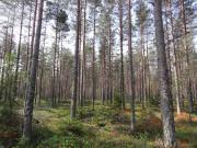 Schweden - Wälder