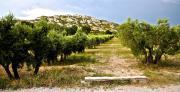 Provence - Mouriès